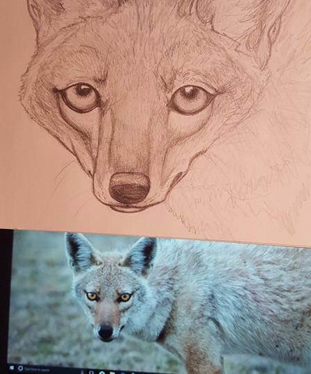 Golden Wolf Art
