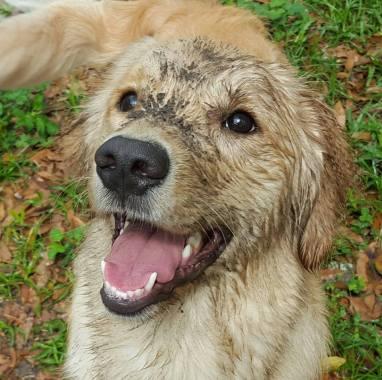 Muddy Beast